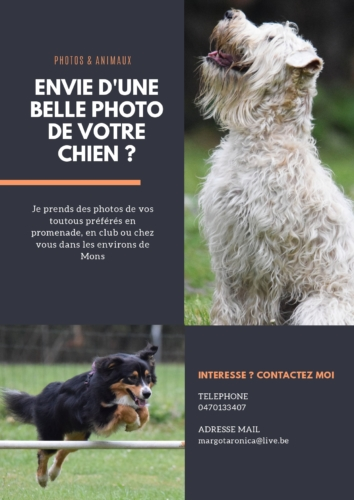 Graphisme Canva Photos & Animaux